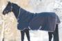Der Winter kommt, Pferde eindecken ja oder nein…?