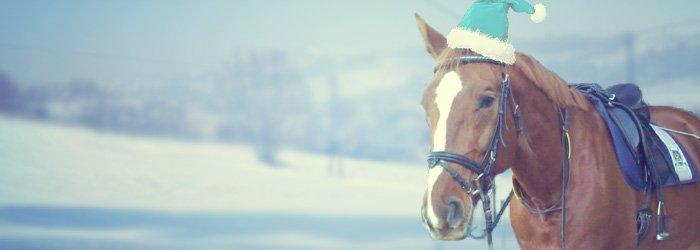 inhalator pferd selbst bauen