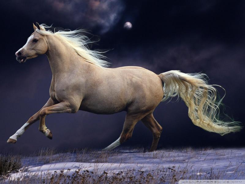 galloping_at_night-wallpaper-800x600