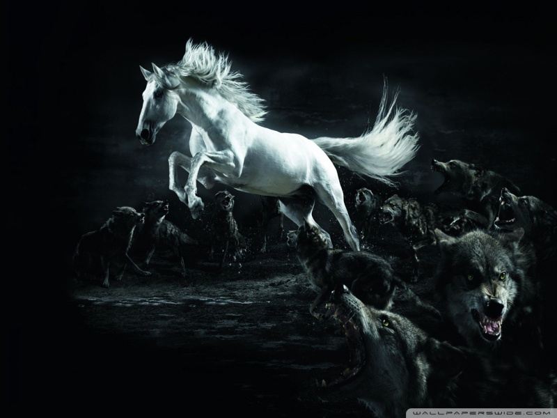 horse_and_wolves-wallpaper-800x600