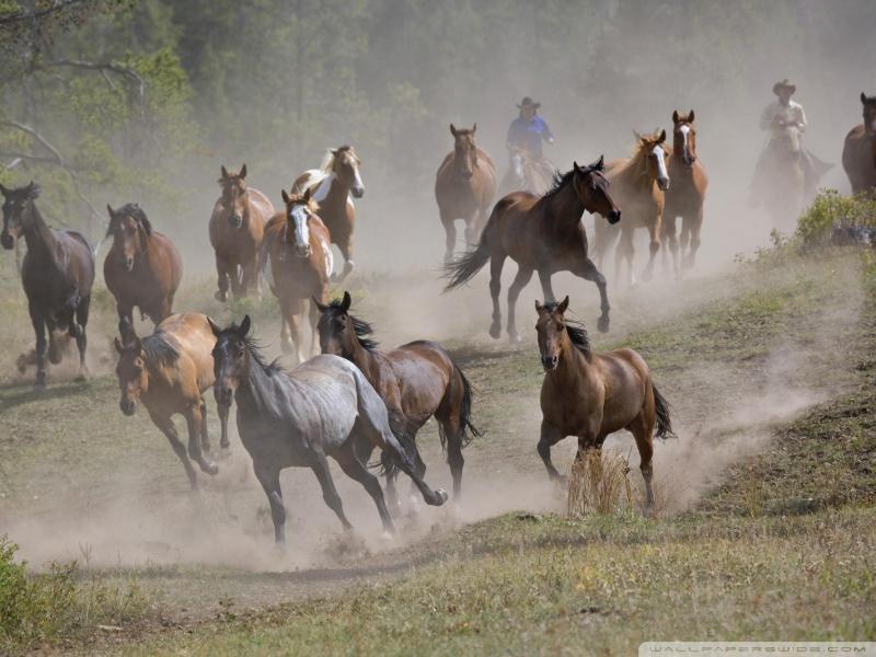 horse_roundup_montana-wallpaper-800x600