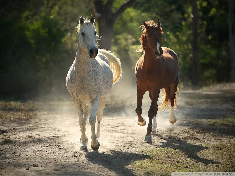 runaway_horses-wallpaper-800x600