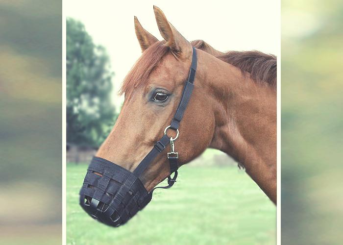 Der Maulkorb für Pferde – hilfreich ?