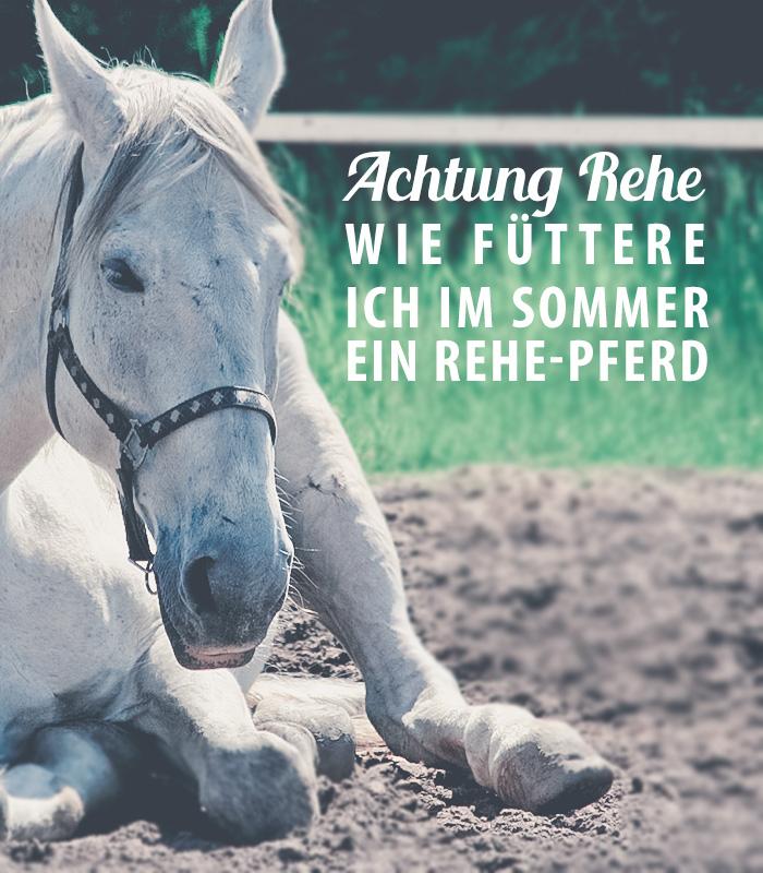 Achtung Rehe – wie füttere ich im Sommer ein Rehe-Pferd