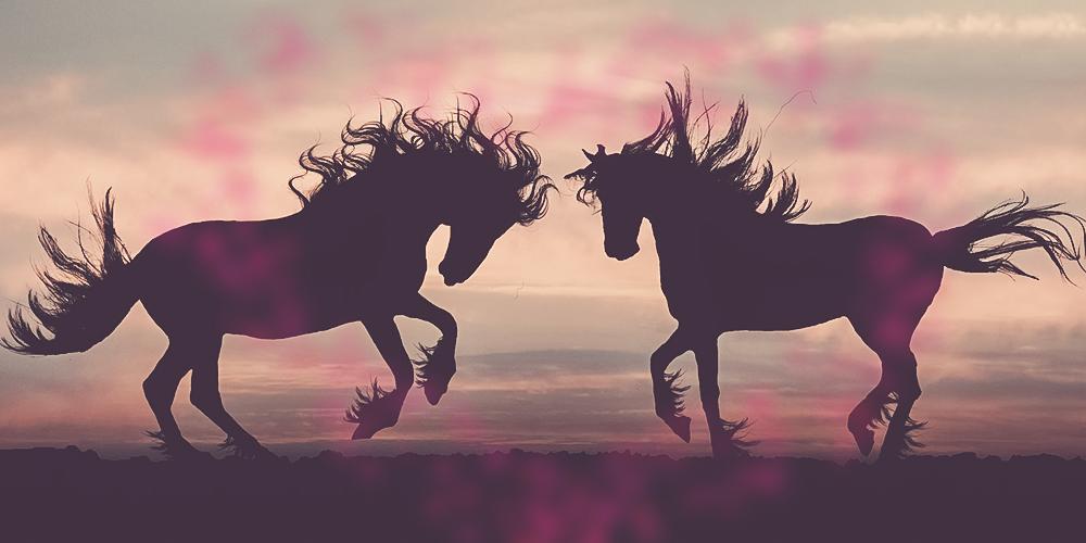 Faszination Pferd – warum begeistern uns Pferde?