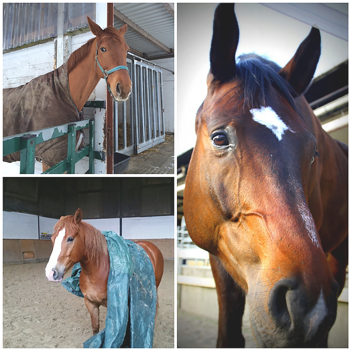 Wir stellen Euch unsere Pferde vor