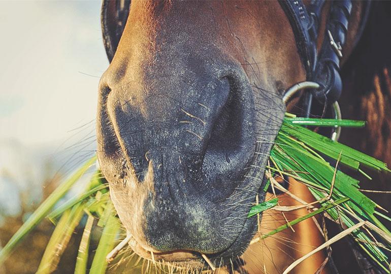 Neue Studien für die Pferdefütterung
