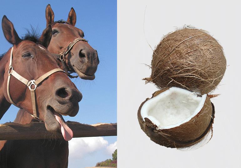 Gut zu wissen: Kokosöl hilft bei Ekzem!