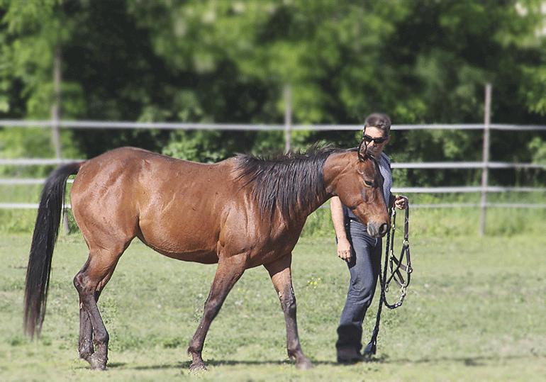 Pferde sicher auf die Wiese oder den Paddock bringen