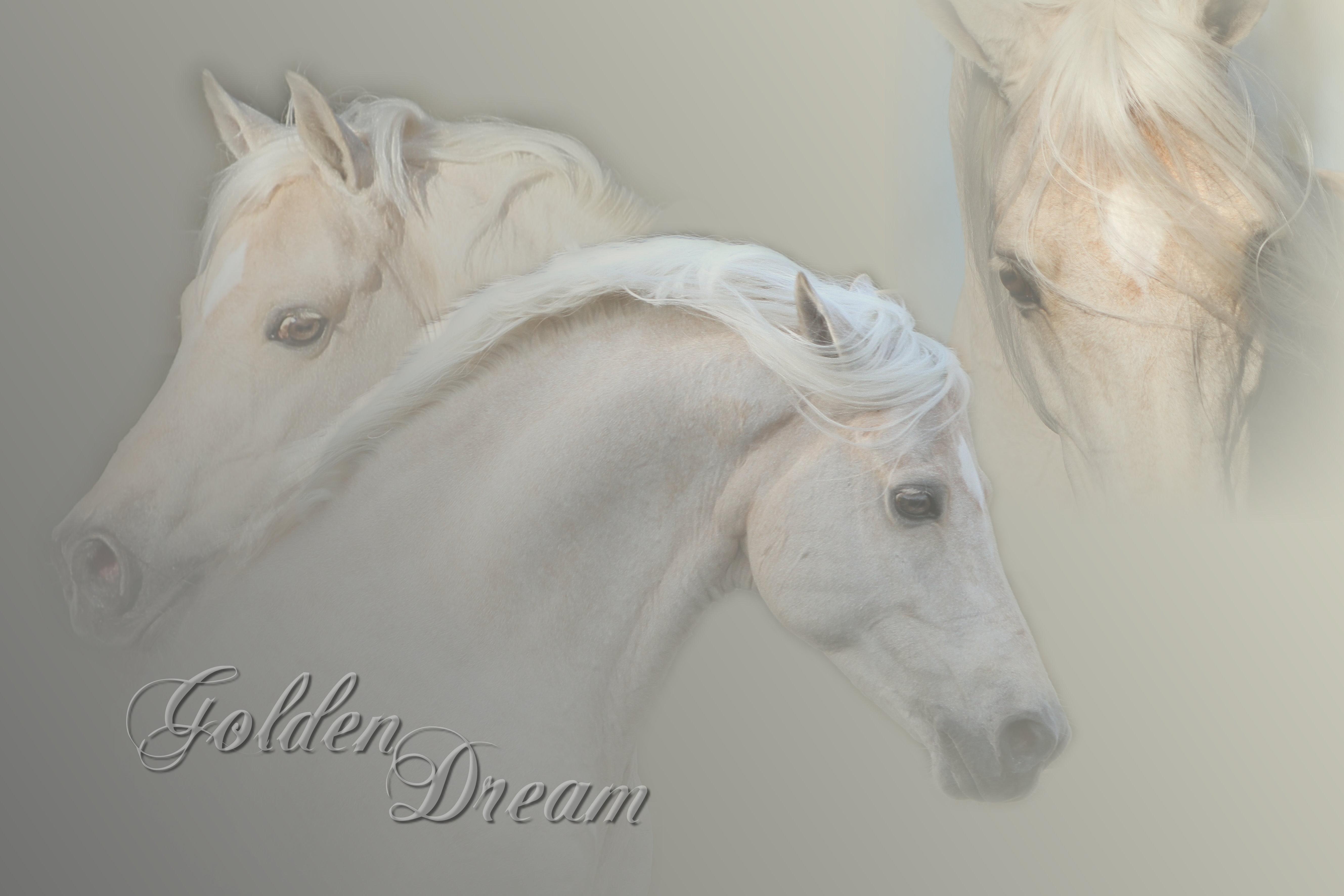 Kollage_Golden_Dream_Kb