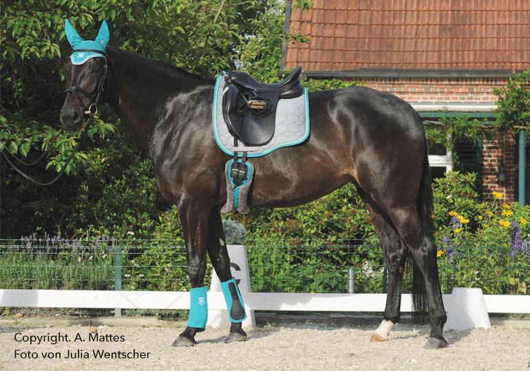 Mattes Lammfellgurte – Welcher Gurt passt zu welchem Pferd?