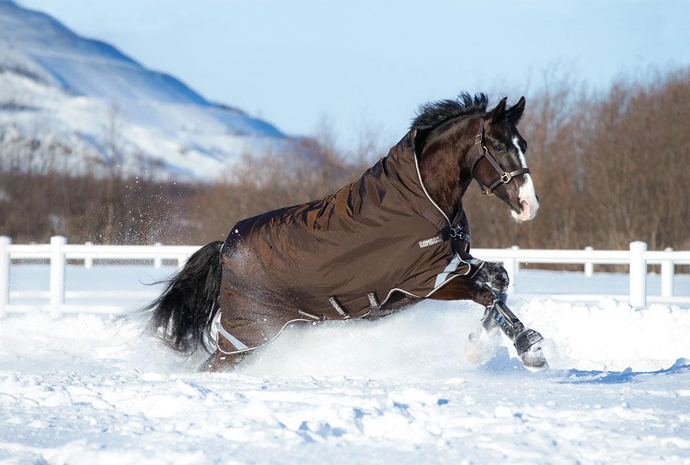 Das Pferdedecken-Einmaleins