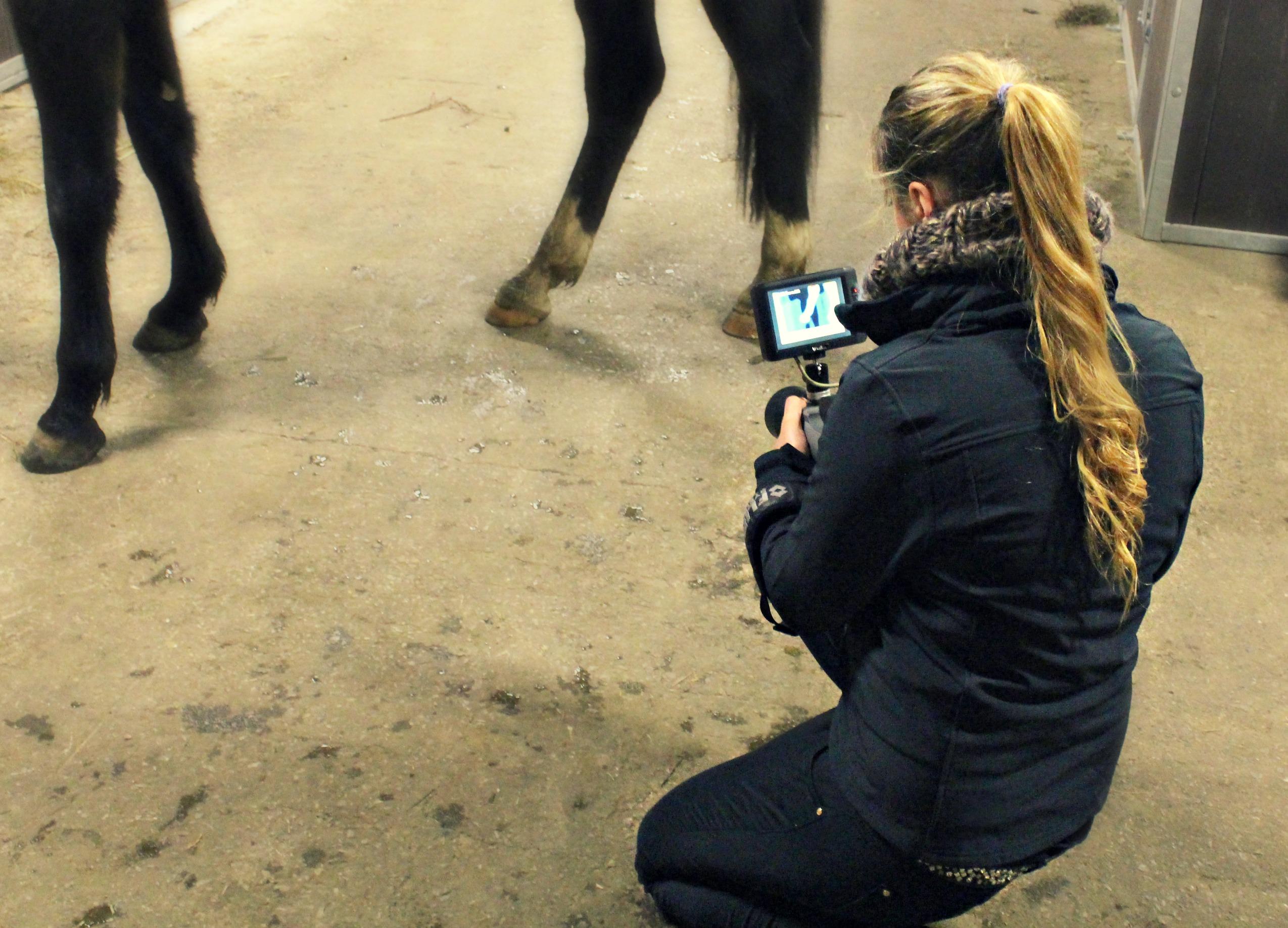 Thermografie bei Pferden