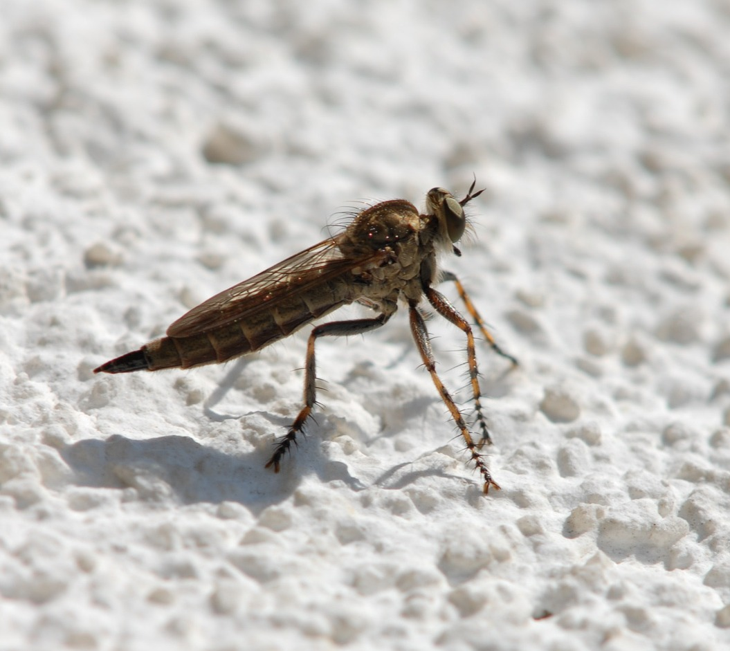 l stige insekten wie ticken diese plagegeister eigentlich. Black Bedroom Furniture Sets. Home Design Ideas