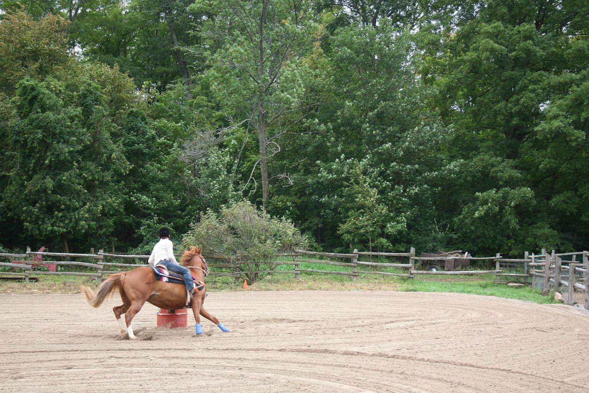horse-1008092_1920