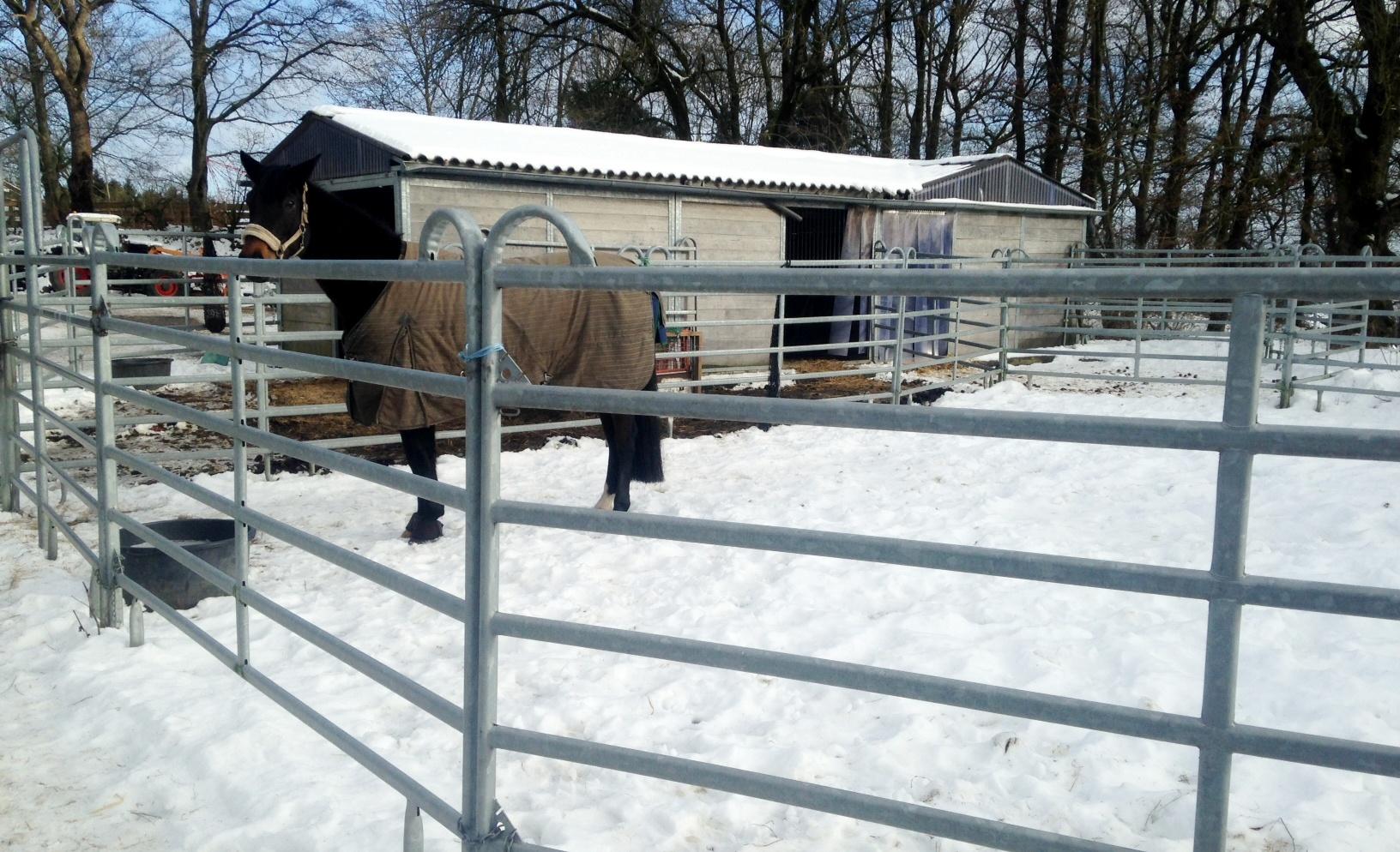 Die Winterarbeit mit dem Pferd