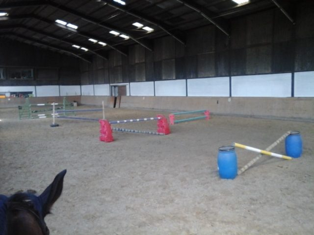 Sinnvoll gestaltetes Training für ein gesundes & leistungsfähiges Pferd
