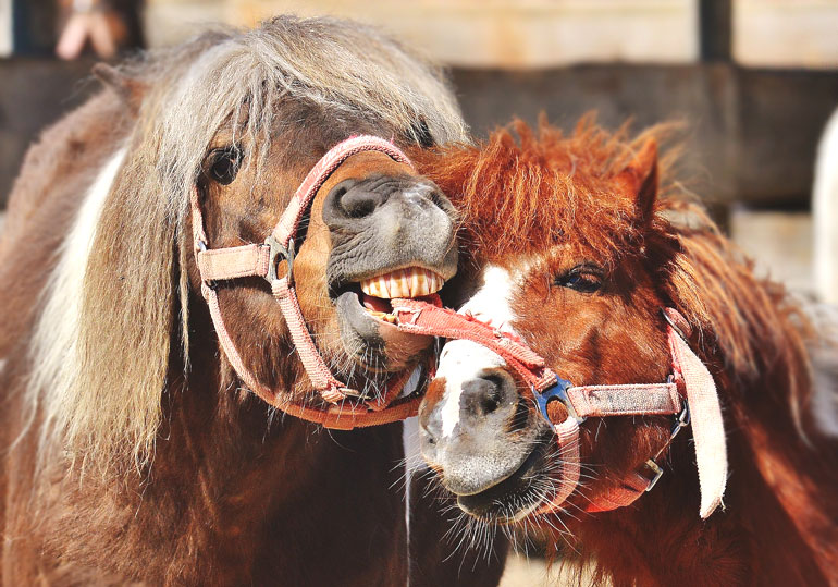 Schicksal Pferd – Eine lustige Geschichte