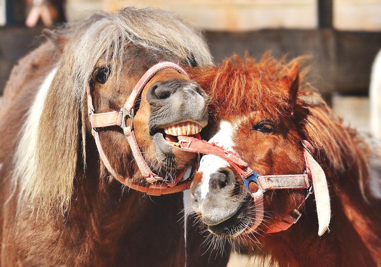 Lustige Pferdebilder