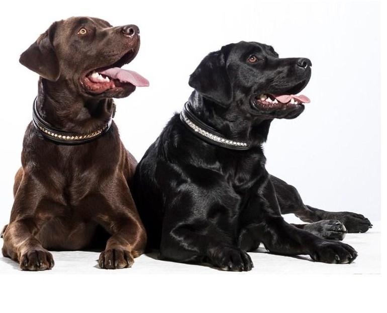 Hundehalsband Azzaro von SD Design