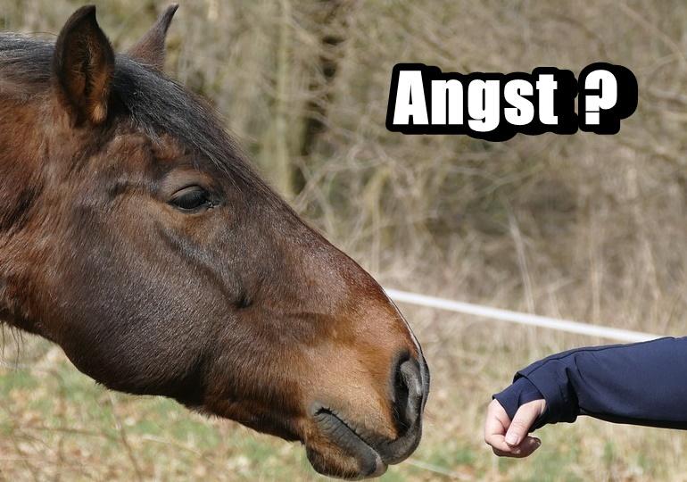 Pferdeangst kann ganz schnell vergehen