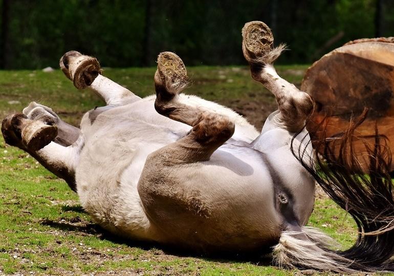 Was tun wenn sich das Pferd festlegt?
