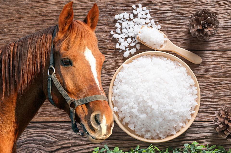 Salz in der Pferdefütterung – wichtig!