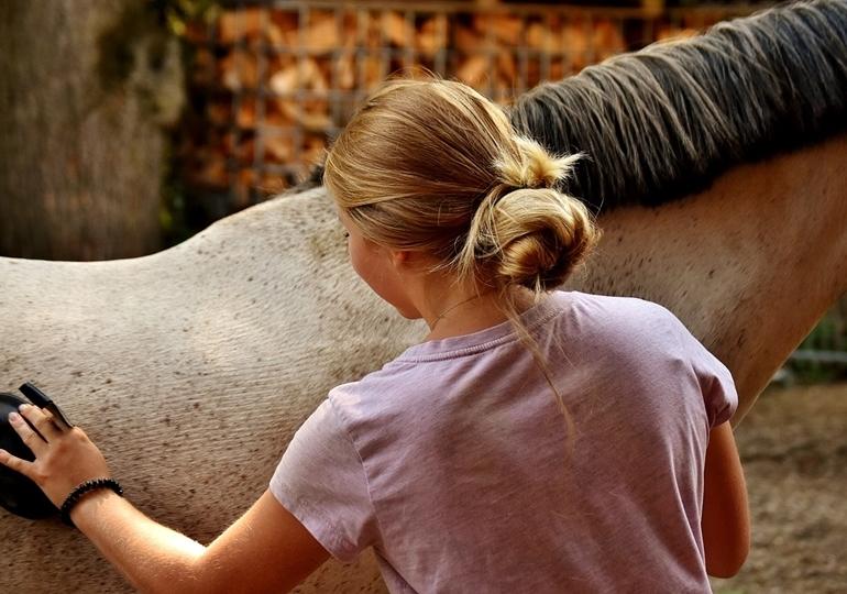 Ostheopatie, Physiotherapie, Chiropraktik beim Pferd