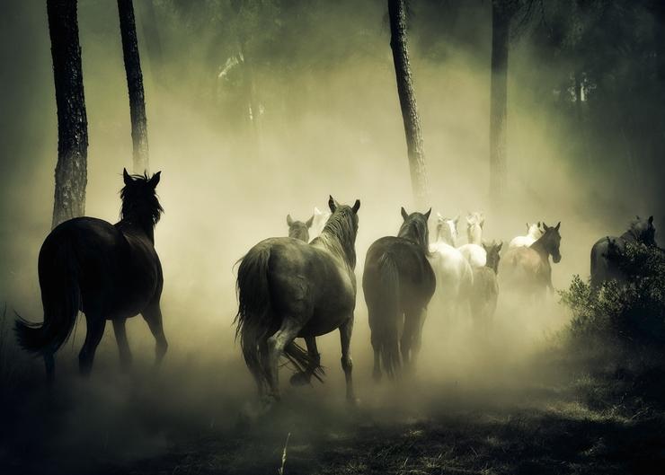 Natürliche Bedürfnisse der Pferde