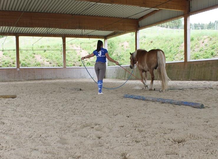 Wofür Horsemanship?