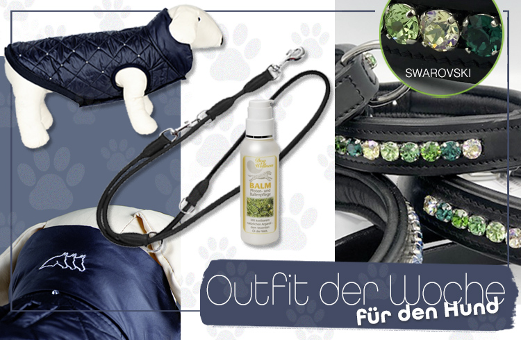 Hunde – Outfit