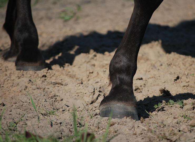 Oft gefürchtete Gallen beim Pferd