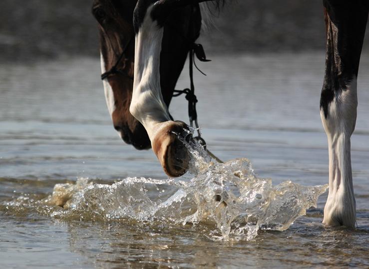Kühlgamaschen: Erfrischende Erholung für das Pferdebein