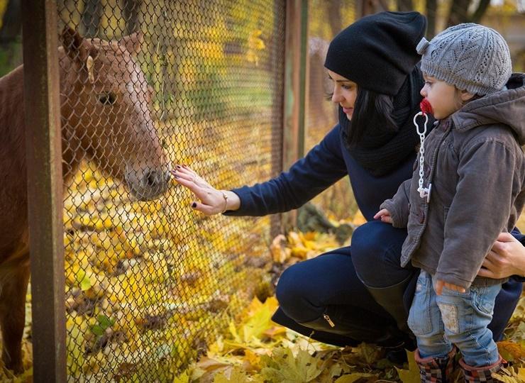 Mama sein, Familie haben und dann Pferdebesitzer sein! Geht das überhaupt?