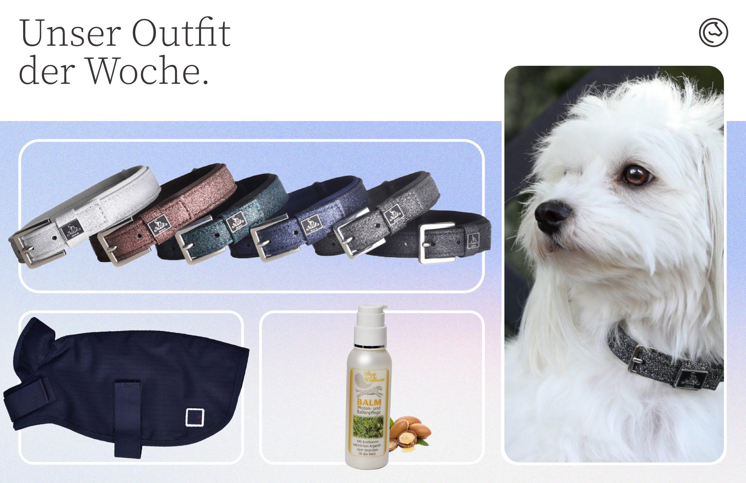Hunde Outfit zum Welthundetag
